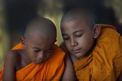 _MG_4462-le-14_04_2016_wat-thail-wattanaram-maesot-thailande-christophe-cochez-cop (christophe cochez) Tags: burmes burma birmanie birman myanmar thailand thailande maesot myawadyy monk bonze novice religion watthailwattanaram travel voyage bouddhisme buddhism portrait