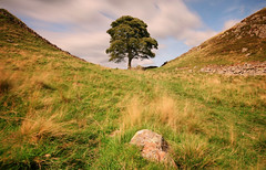 Sycamore Gap (Andy Watson1) Tags: sycamore gap sycamoregap hadrians wall hadrianswall tree northumberland northumbria england uk united kingdom national park english great britain british long exposure september summer travel trip sky blue clouds green grass historic rock landscape view scenery scenic outdoors nature countryside light windy blur canon 70d sigma