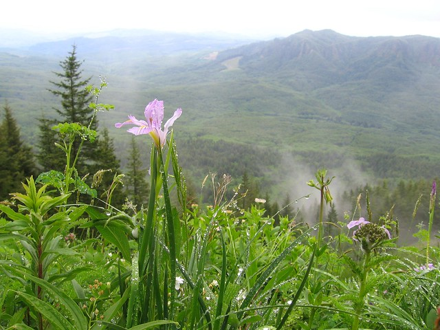 iris, saddle mountain