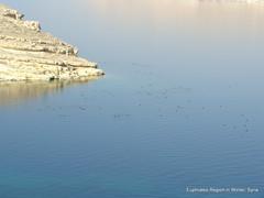 euphrates river 21-01-2011 12-13-18