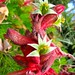 Soft Velvet Flowers