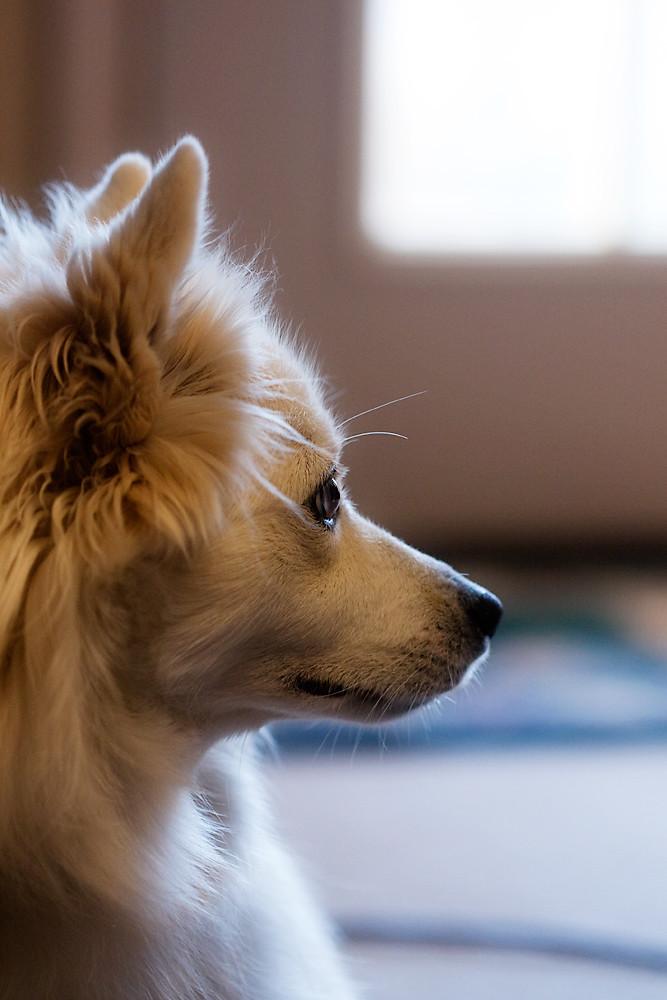 Macro 28/31:  Trixie in Profile