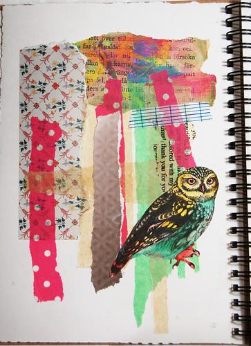 Parrot owl
