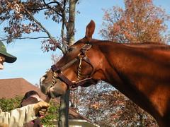 CZ4 (Gordon Calhoun) Tags: horseracing lanesend cityzip
