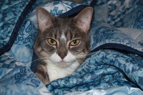 Undercover Cat!