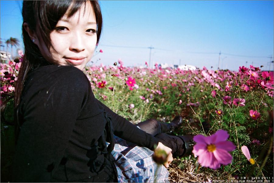 葵。波斯花田