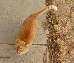 Still frame from video (Hairlover) Tags: pet cats pets public cat kitten kitty kittens kitties allcatsnopeople