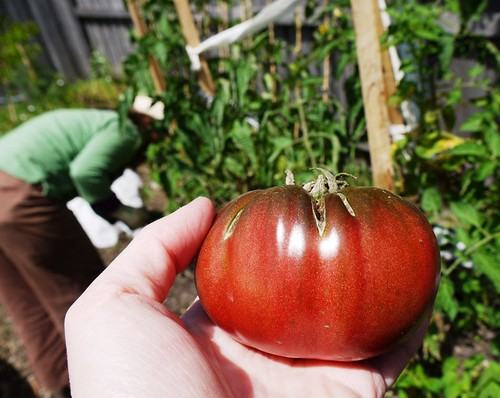 Tomato: Purple Cherokee