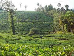 100_0270 (travellersai) Tags: kerala treehouse wayanad teaestate wildboar bandipur chital vythri banasuradam soojiparafalls streamvalleyresorts