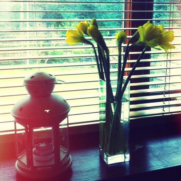 My mum bought me daffodils! <3