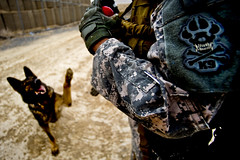 Military Working Dog (U.S. Central Command (CENTCOM)) Tags: afghanistan k9 centcom afg afcent oef operationenduringfreedom mwd zabul militaryworkingdogs uscentralcommand 1ctcs foblagman combatcamer msgtcadiz