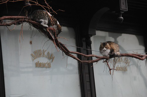 Cats out of the rain