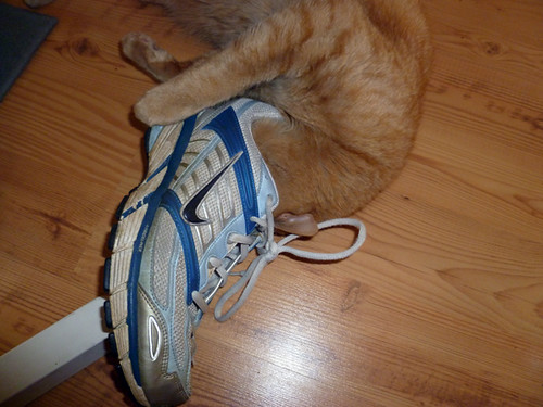 palpy likes shoe smell