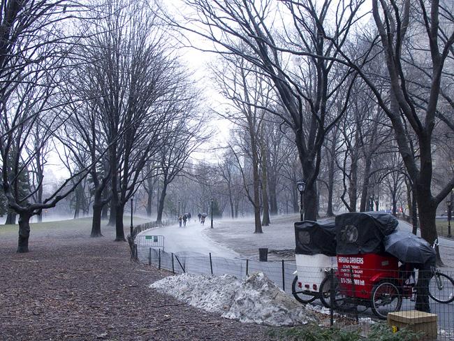 Central Park, in Fog