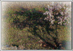 """Sombra de almendro tirando a abstracto • <a style=""""font-size:0.8em;"""" href=""""http://www.flickr.com/photos/15452905@N02/5482481124/"""" target=""""_blank"""">View on Flickr</a>"""