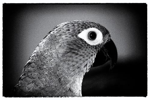 Noir Bird