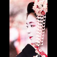 (Masahiro Makino) Tags: japan photoshop canon eos kyoto kiss shrine profile plum sigma maiko adobe   70300mm ume  lightroom  kitanotenmangu x3 baikasai kanzashi hairornaments f456     plumblossomviewingfestival ichitomo  20110225134018canoneoskissx3ls640p outdoorteaceremony