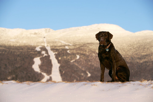 Dog sits on top of mountain