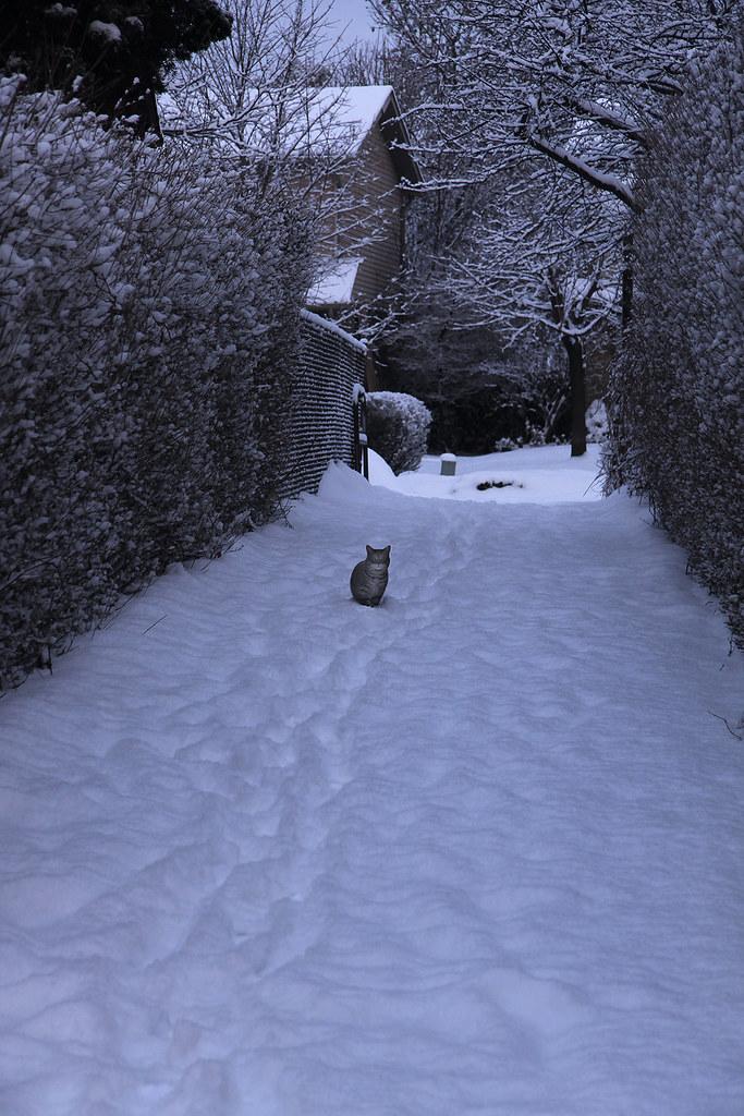 cat in the path