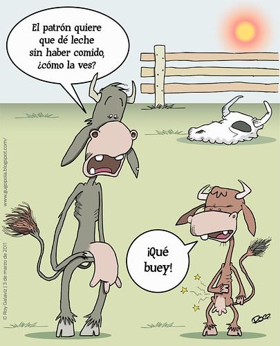 Vacas flacas