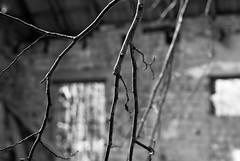 A l'abandon - Parages de Philippsbourg (Hergott Loc) Tags: paysages vosgesdunord