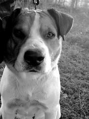 I DEMAND (Willow Creek Photography) Tags: dog mutt canine pikapet harleyrey kingstonreyphotography