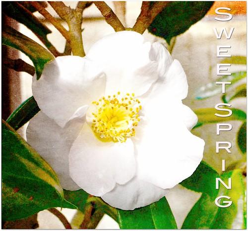 flower with dustyrose from k klassen