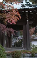 (DAGUANG-DG) Tags: autumn fall kamakura sigma kanagawa dp2s dp1x