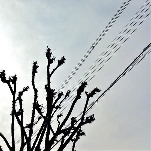 今日の写真 No.152 – 昨日Instagramへ投稿した写真(2枚)/iPhone4 + iPhoto