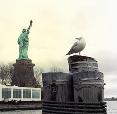 Perched (Naoki Tai) Tags: nyc newyorkcity newyork bird statue outside liberty outdoors seagull gull perch perched statueofliberty libertyisland