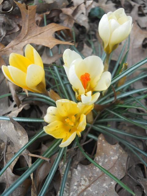 spring2011 004