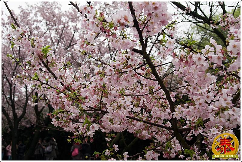 2011.03.12 夜衝無極天元宮-15