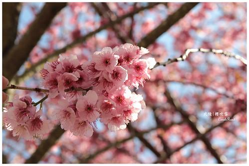 2011-03-04 陽明武陵 254 r