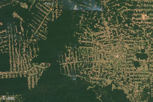 amazon_deforestation_20090821