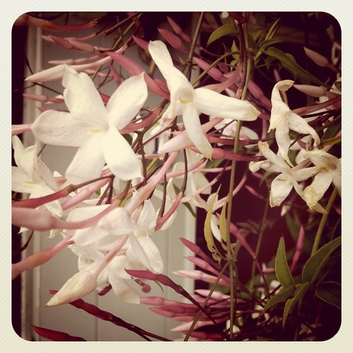 front porch jasmine