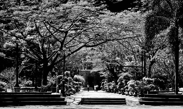 IMG_0278 Park , black and white photograhy, 黑白摄影 ,公园