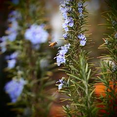 PhoTones Works #250 (TAKUMA KIMURA) Tags: plant flower green nature insect landscape flying small bee    nokton   kimura   takuma     epl2 photones