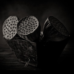 Still Life with Water Lilly Pods (kevsyd) Tags: stilllife pentax 645d kevinbest waterlillyseedpods