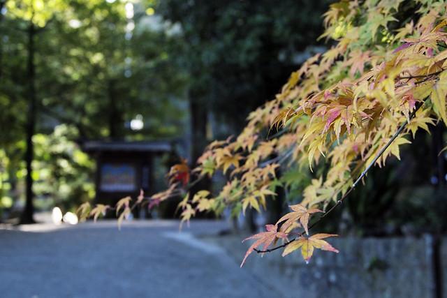 20101119_085945_石上神社