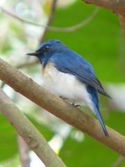 P1150865 (babsybou) Tags: travel india birds silent watching kerala du valley yatra sud inde attapadi birdswatching babsybou malleeshwaramjunglelodge pettickal