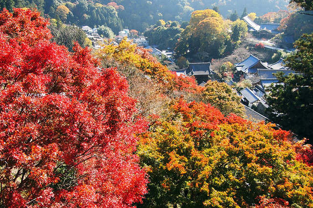 20101119_112341_長谷寺
