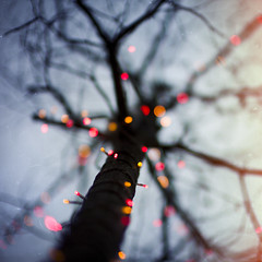 216/365 (brandonhuang) Tags: light red orange tree texture square lights branch bokeh branches brandonhuang