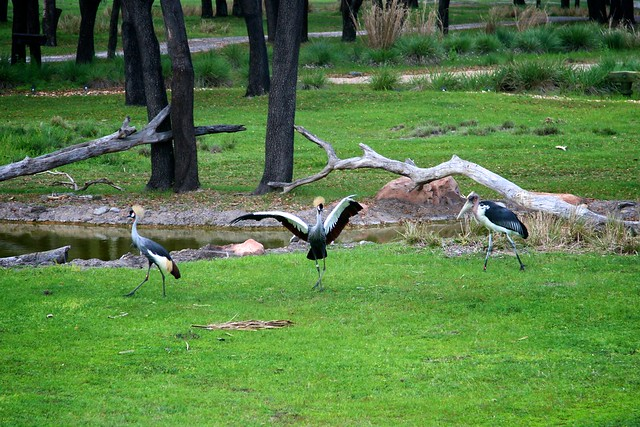cranes and stork