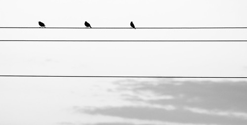 Birds [high contrast] by laguglio