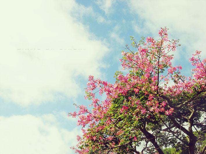 El Arbol de otoño que me regala flores