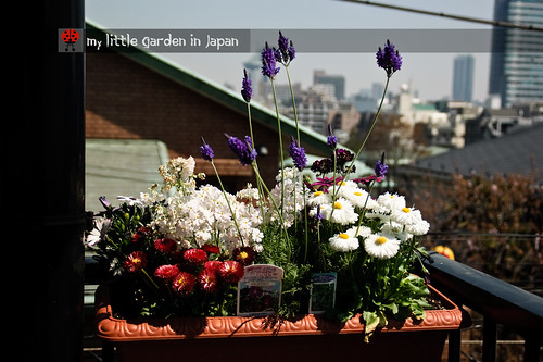 my-new-little-garden-in-japan6