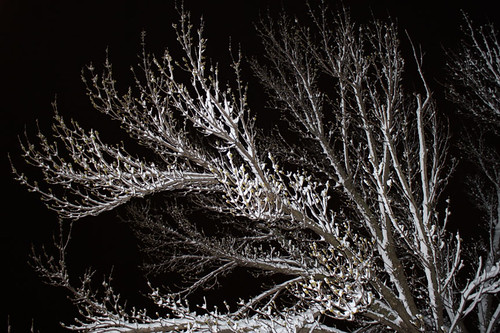 snow_spring_tree