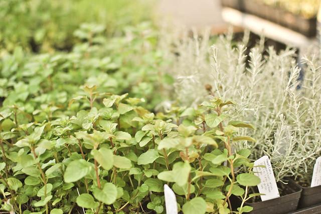herbs at the farmer's market.