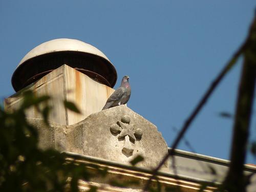 focus on the pigeon