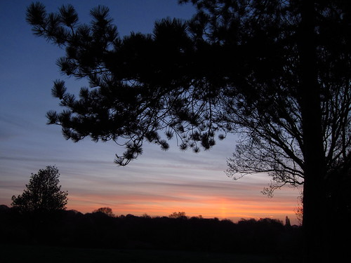 Hampstead Heath at Dawn